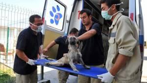 Büyükşehir'den ilçelere 'sokak hayvanı' eleştirisi