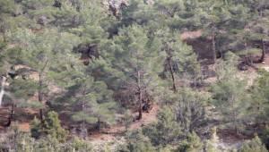 Beypazarı'nda Kaybolan 3 Kişi Ormanda Bulundu