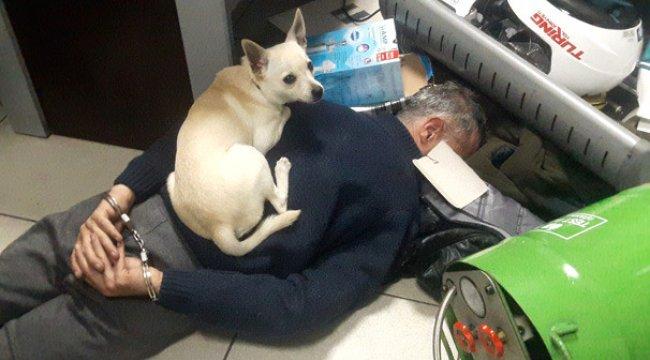 Köpeği, Kıskıvrak Yakalanan Torbacının Üzerine Oturup Bekledi
