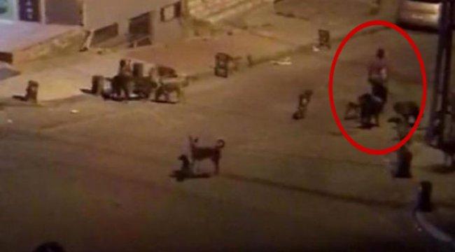 Mahallede Korku Saçıyorlardı! Köpekler Toplatıldı, Sahibi Gözaltına Alındı