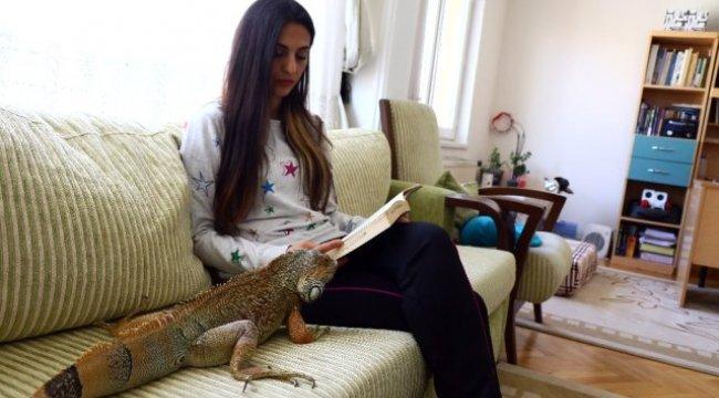 İguana Şinasi'nin Ev Keyfi