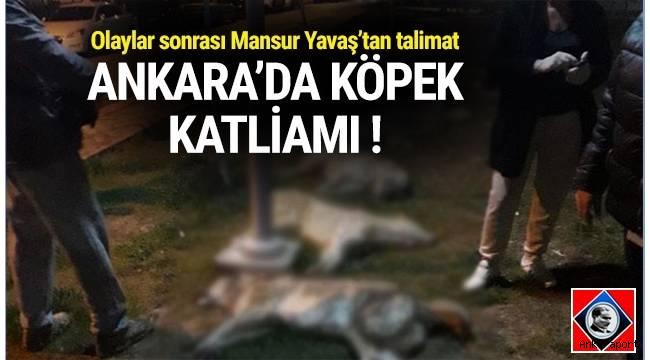 Ankara Batıkent'de çok sayıda köpek zehirlenerek öldürüldü.