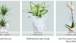 Ankara (Çankaya) Çiçekçileri & Telefonları