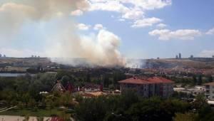 Ankara'da orman yangını...