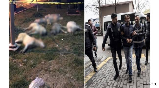 Ankara Yenimahalle'de 16 köpeği zehirleyenler ağır cezada yargılanacaklar....
