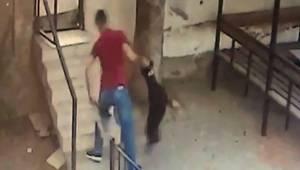 Ankara'da, 5 kediyi öldüren köpeğe sahibinden dayak kamerada