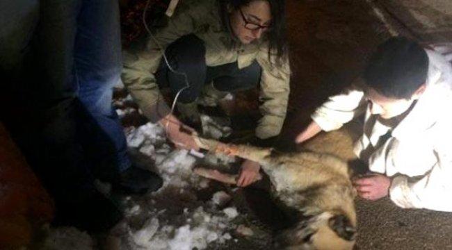 Ankara'da, kedi ve köpekleri zehirleyen doktora 5 yıl hapis cezası verildi